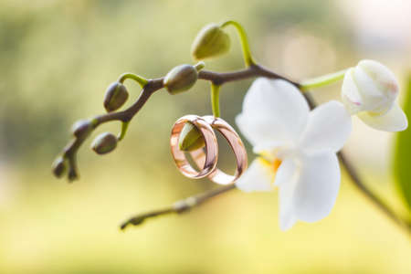 Golden wedding rings hanging on white orchid Archivio Fotografico