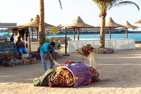 azur: HURGHADA, EGYPT - MAY 16, 2015:   Egyptian man cares for tourist camel in Arabia Azur Resort