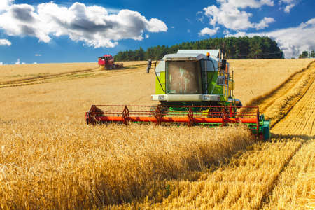 harvest: combine harvester working on a wheat field Stock Photo
