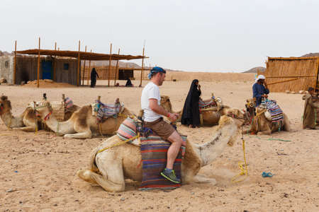 bedouin: HURGHADA, EGYPT - MAY 18, 2015: Arab boy, a resident of the Bedouin village rolls for the money tourists on a camel.