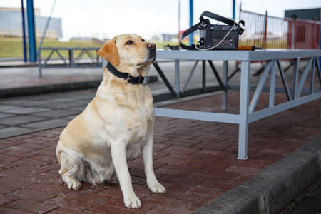 sittting: The customs dog for looking drugs and weapons on border-line Stock Photo