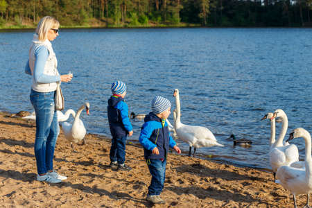 feeds: Mother and two twin brothers feeds the swans on the lake Stock Photo