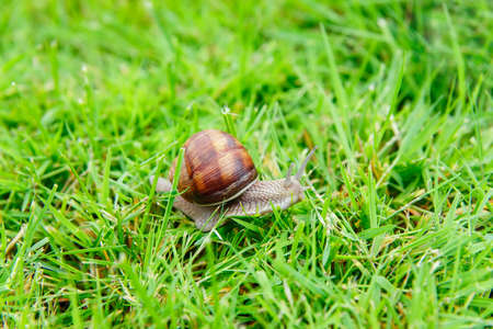 the snail in the garden on grass clippings