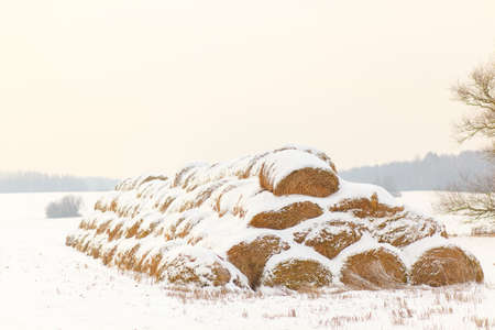 animal feed: Straw Fodder Bales in Winter: straw that were left after the fall harvest are used as animal feed and bedding during the winter months