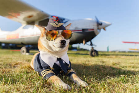 Funny photo of the Akita inu dog in a pilot suit at the airport