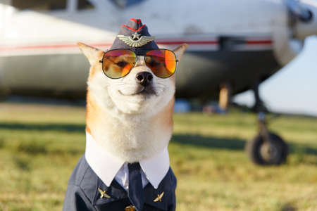 Funny close up photo of smiling Shiba Inu dog in a pilot suit near by airplane