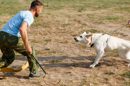 The instructor conducts the lesson with the white Swiss shepherd dog. The dog protects its master.