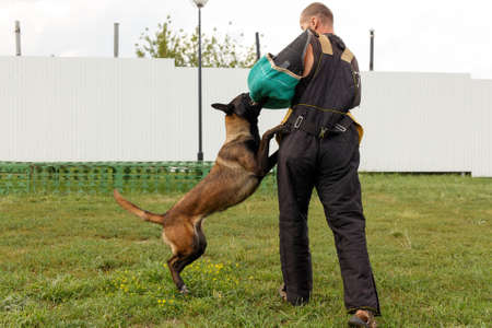 The instructor conducts the lesson with the Belgian Shepherd dog. The dog protects its master.