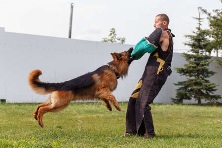 The instructor conducts the lesson with the German Shepherd dog. The dog protects its master.