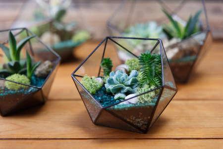 Florarium Glass vase with succulent plant. Miniature cactus on wooden background. 写真素材