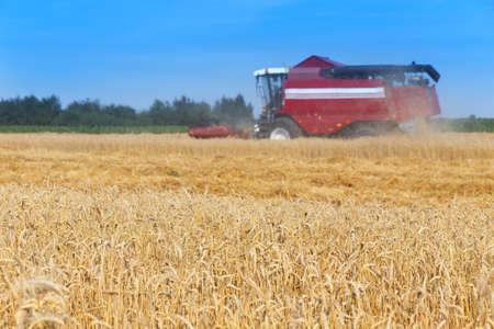 combine harvester working on a wheat field Archivio Fotografico - 129918815