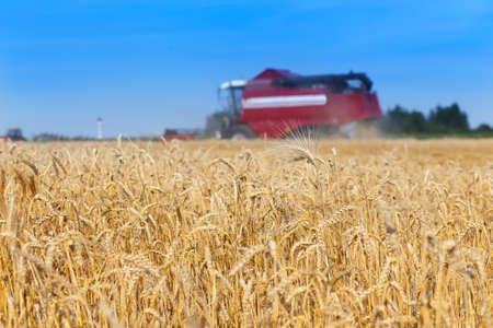 combine harvester working on a wheat field Banco de Imagens