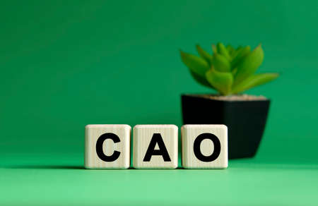 CAO - business concept on a green background. Wooden cubes and flower in a pot. Banque d'images