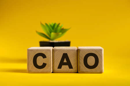CAO - conceptual business text on wooden cubes on a bright background and a black pot with a flower behind