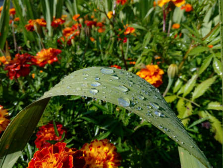 Raindrops on a green leaf on a background of flowers
