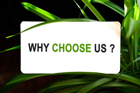 Why choose us text on white surrounded by green leaves Stock fotó