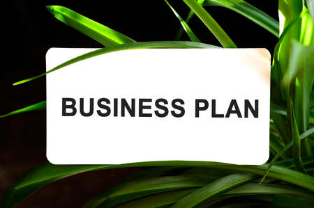 Business plan text on white surrounded by green leaves