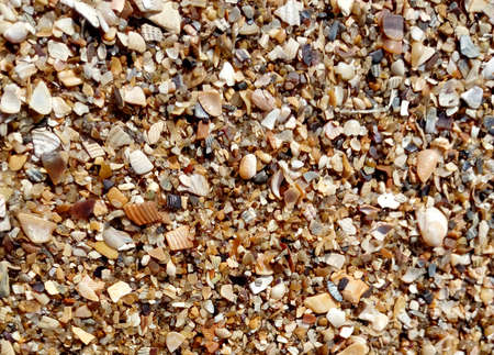 Sea seashells for background image of banner
