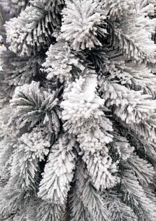 Snow-white branches of a Christmas tree sprinkled with white snow 免版税图像