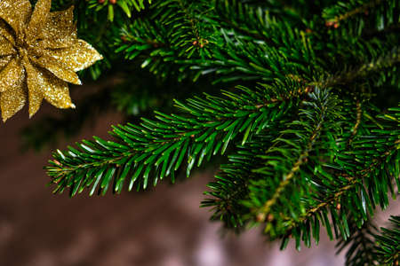 Christmas tree, evergreen Christmas tree with decorative toys 免版税图像