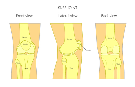 Vector illustration anatomy of a healthy human knee joint isolated on white background. Front, back and side or lateral view of the knee joint. For advertising and other medical publications. EPS 10 Vettoriali