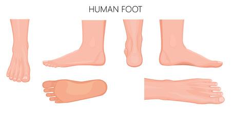 Vistas diferentes de um pé humano (parte dianteira, parte traseira, lado, lateral, medial, dorsal e plantar) isolado no fundo branco. Ilustração vetorial para uso médico (cuidados de saúde). EPS 10