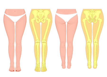 Posterior, frontal, anterior, back views, sides of a European female legs, hips, knees and ankles with underpants. Illustration for advertising, medical publications.