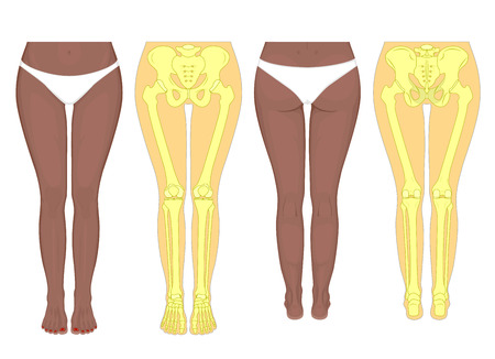 Posterior, frontal, anterior, back views of an African, Indian, Asian female legs, hips, knees, ankles with underpants. Vector illustration for advertising, medical (health care) publications.