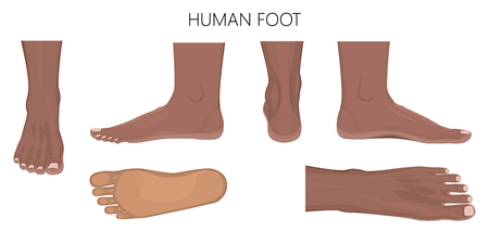 Different views of afro american human foot (front, back, side, lateral, medial, dorsal and plantar) isolated on white background. Vector illustration for medical (health care) use.