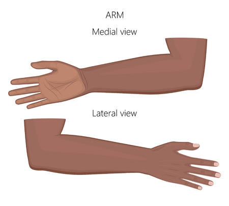 Vector illustration of a healthy human Afro American arm isolated on white background. Medial and lateral view. For advertising, medical publications. EPS 8.