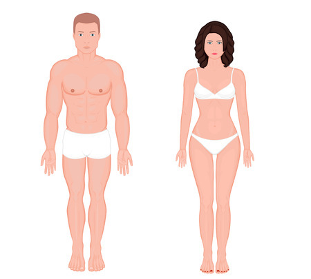 Front view of body of European man and woman in full growth in underwear. Vector illustration for advertising, medical (health care), bodybuilding, sport publication. EPS 8