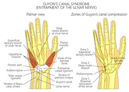 For medical publications. EPS 10 Illustration