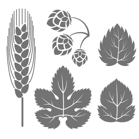 Vector illustration. Gray outline, contour of a hop branch, isolated on white background. Decorative design elements for beer menu, page and bottle decoration.