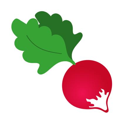 Radish icon. Cartoon illustration of radish vector icon for web design