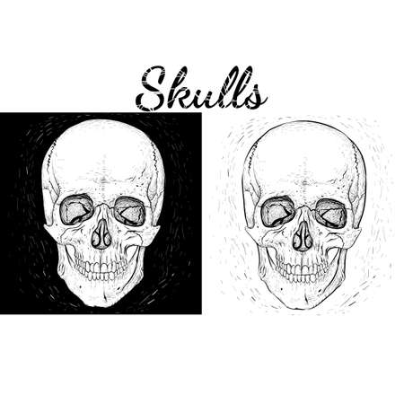 Black and white skulls. Hand-drawn style Illustration