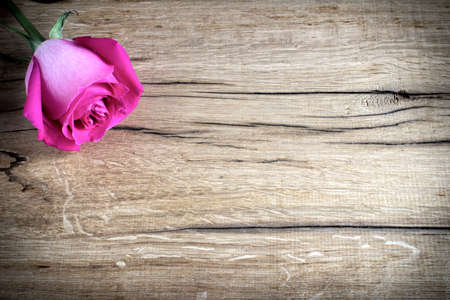 pink rose on wooden background
