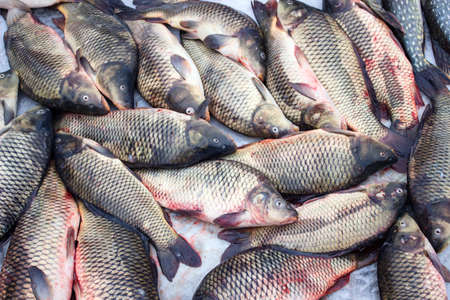 alive: Alive carp for sale at St. Nicholas day. Stock Photo