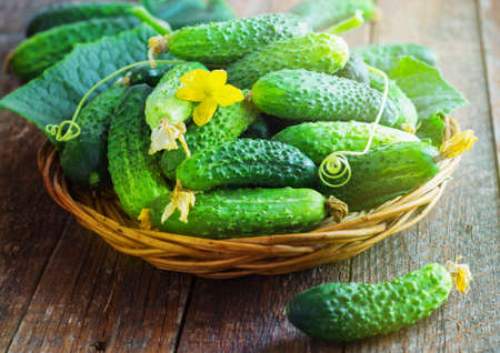 full willow: Harvest cucumbers in a basket on the wooden background retro