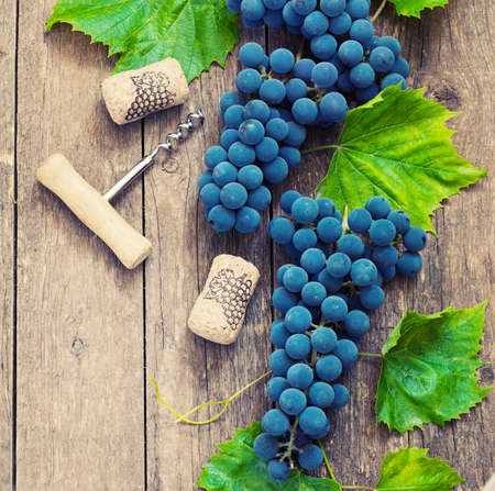 des vins: Blue grapes on a wooden table in vintage country style with a corkscrew and a cork toning