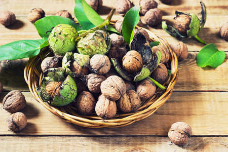 harvest: Walnuts in green husks with leaves on a wooden background toning