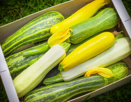 Fresh healthy green zucchini courgettes cucumber in brown wooden box the open air on grass