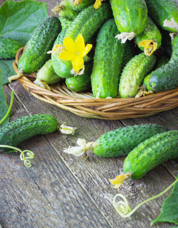 full willow: Harvest cucumbers in a basket on the wooden background