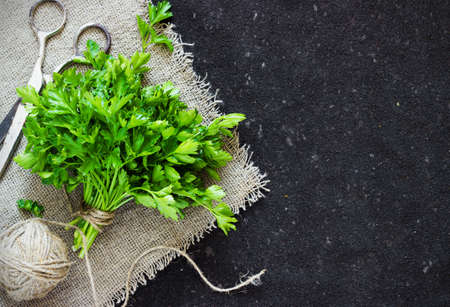 tangle: Green parsley on dark  background linen thread tangle Stock Photo