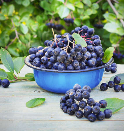 shrubs: chokeberry in a metal bowl on the street