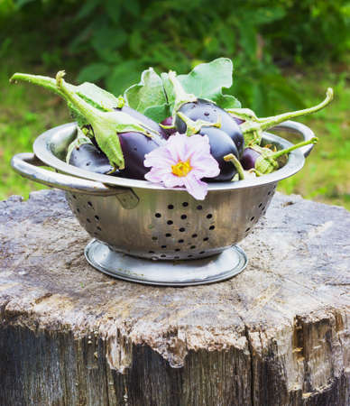 eggplant in a colander in the street on a stump garden summer