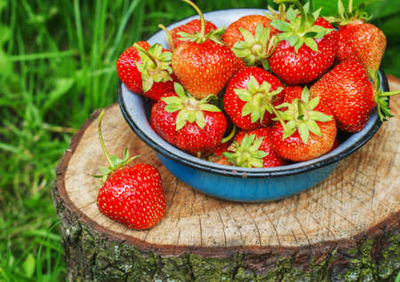 Strawberries in Metal bowl in the garden Stock Photo