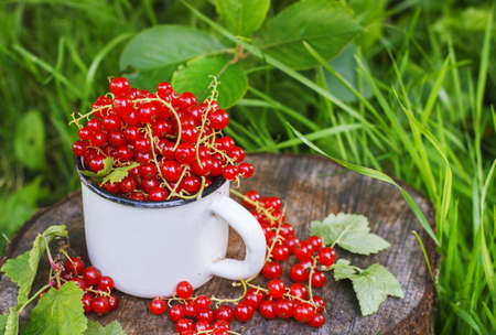 Red currant in a metal mug on the street Foto de archivo