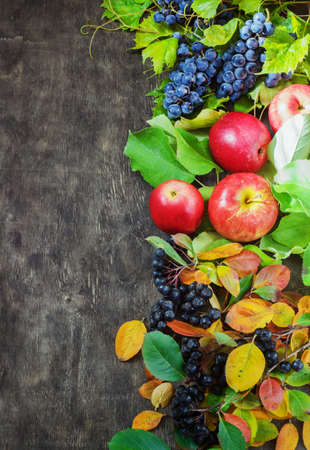 Assortment organic fruits berries apple grape damascene rowanberry dark wooden country background health care natural concept top view.
