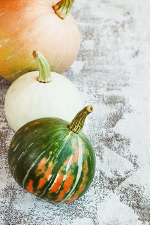 Autumn composition. Pumpkins on white background. Autumn, fall, halloween concept, copy space Stock Photo