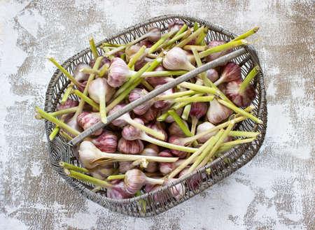 Garlic in a basket on a light background Reklamní fotografie